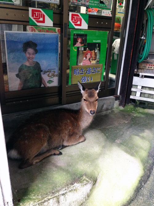 雨宿りする鹿